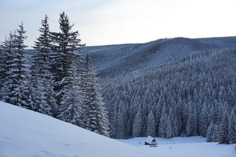 L'hiver en montagnes de Tatra photographie stock libre de droits