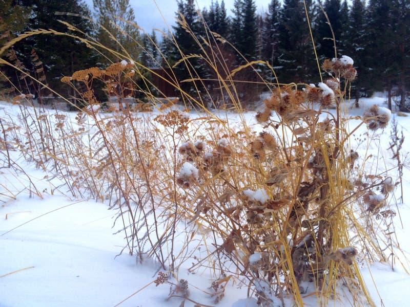 L'hiver en Russie images libres de droits