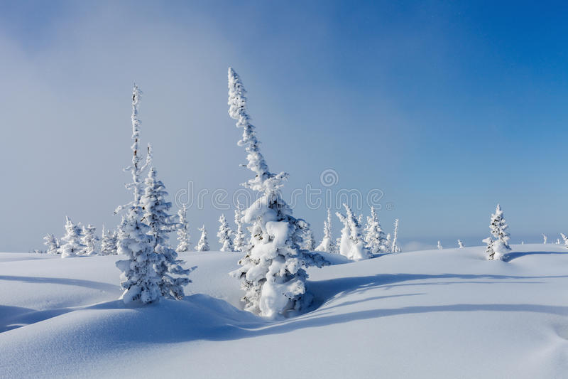 L'hiver en Sibérie images libres de droits