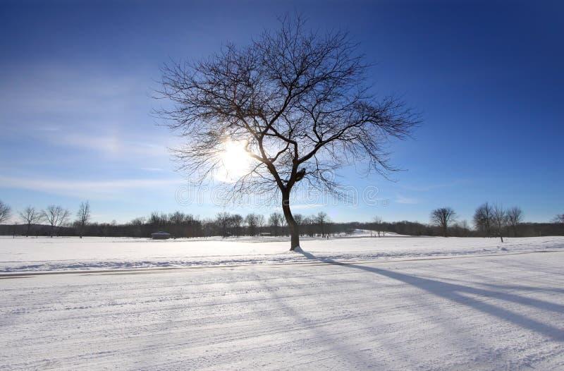 L'hiver ensoleillé images stock