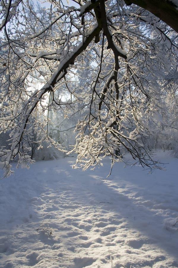 L'hiver III photo stock