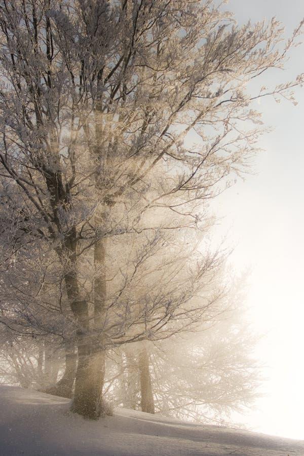 l'hiver léger image libre de droits