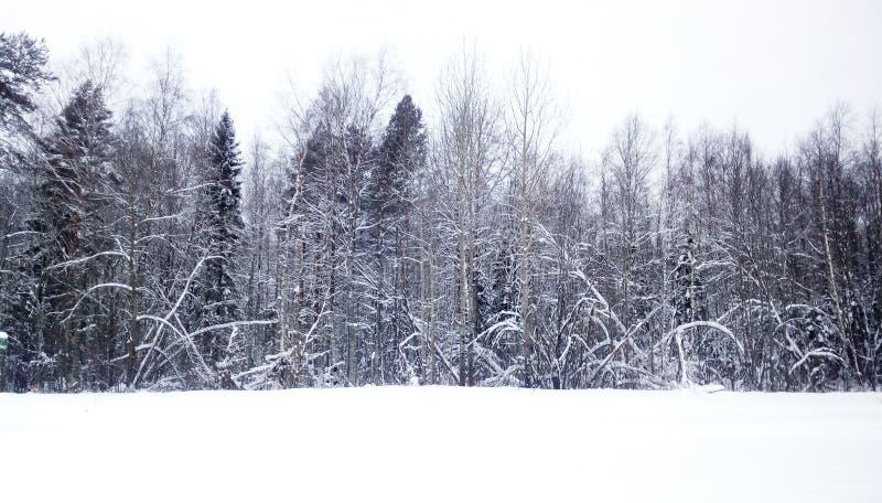l'hiver a mélangé la forêt, le ciel blanc et la neige Russie photographie stock