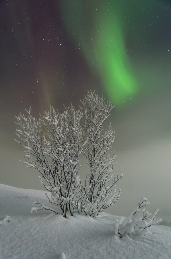 L'hiver, neige, l'aurore, lumières du nord, nuit, se tient le premier rôle images libres de droits