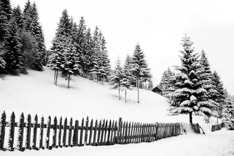 L'hiver noir et blanc image libre de droits
