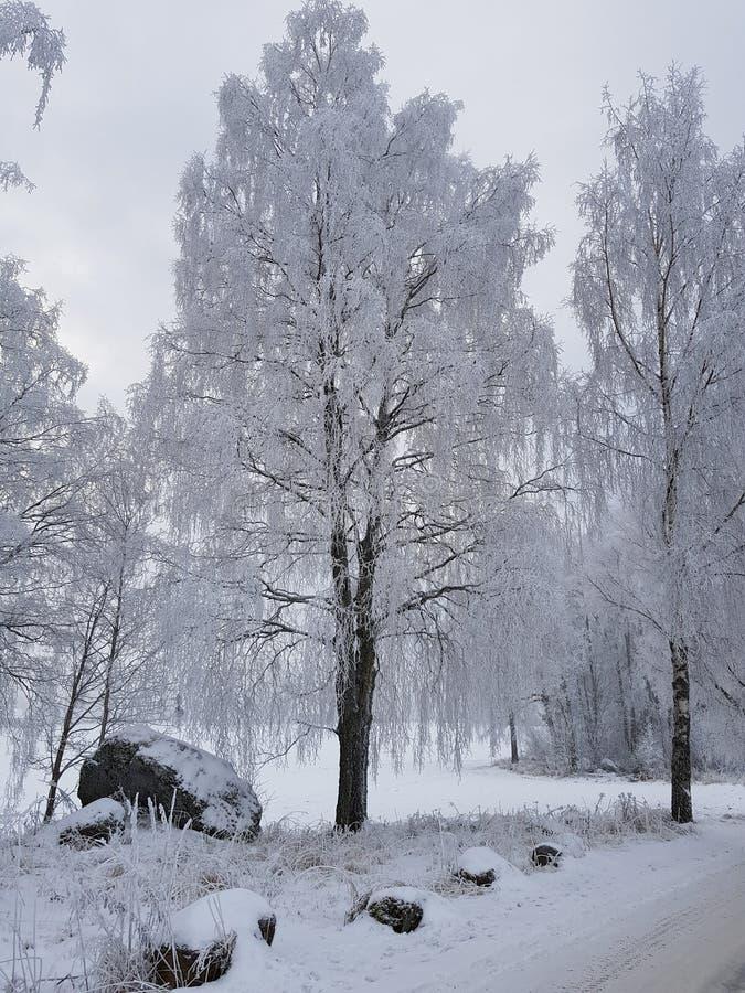 L'hiver norvégien images libres de droits