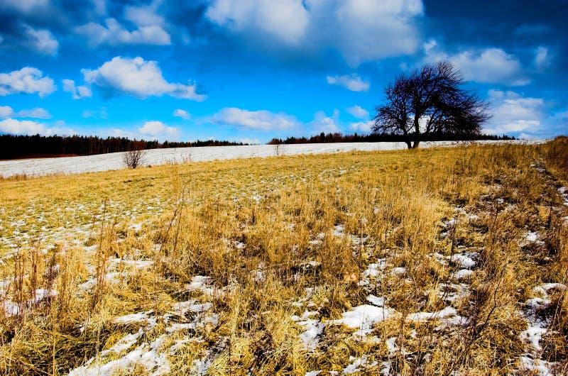 L'hiver - pré de source images stock