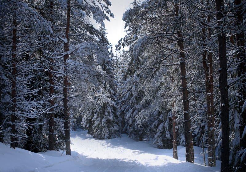 L'hiver suédois photo libre de droits