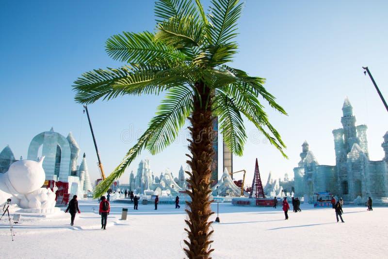 L'hiver tropical photo libre de droits