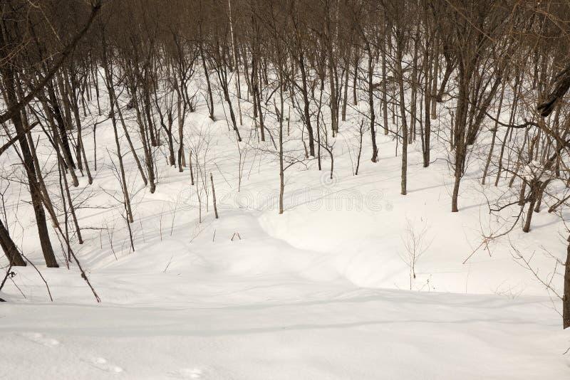 L'Hokkaido è coperto di neve molto molle fotografie stock