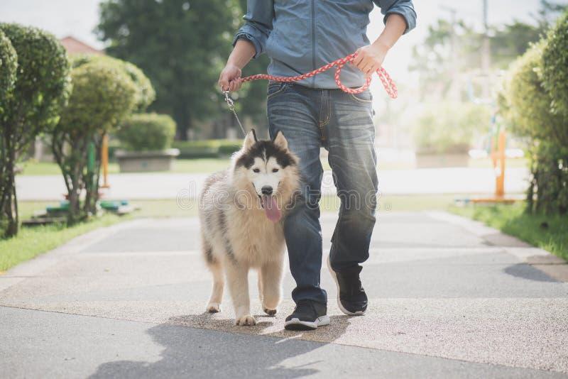 L'homme asiatique marchant avec un chien de traîneau sibérien mettent images libres de droits