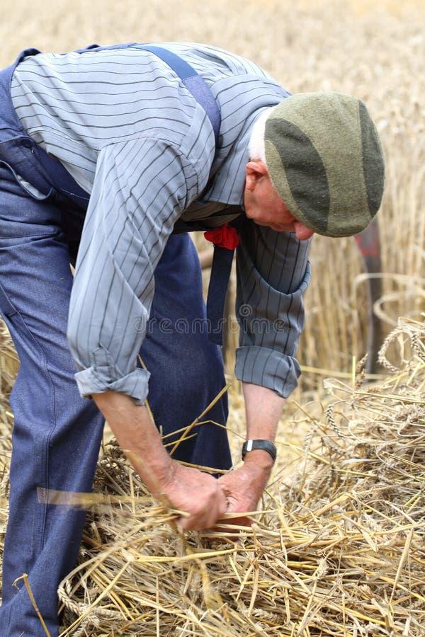 L'homme attachant une moyette de paille s'est habillé dans des vêtements de ferme à la fête de la moisson dans le saint Denis de  photos libres de droits