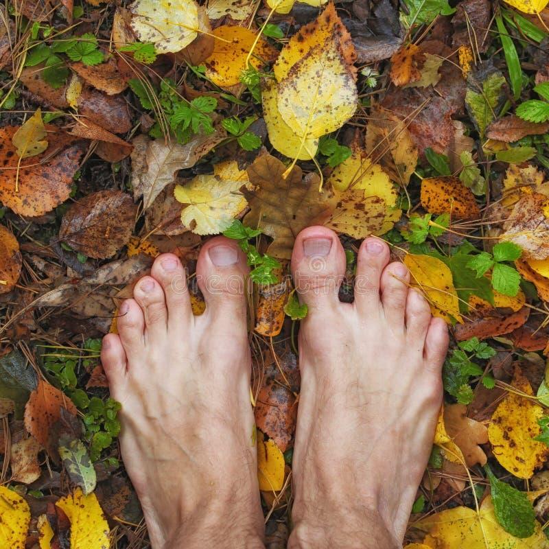 L'homme aux pieds nus se tient sur le feuillage coloré humide d'automne, cadre carré, photographie stock