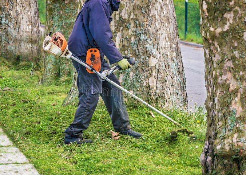 L'homme avec le coupeur usé de buisson équilibre la pelouse envahie autour des arbres à côté de la route photo libre de droits