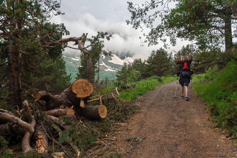 L'homme avec les poteaux rouges de sac à dos et de trekking monte la route de montagne par des montagnes de Caucase de forêt, gor image libre de droits