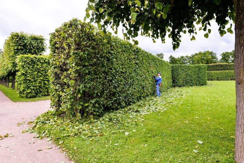 L'homme coupe des arbres en parc Jardinier professionnel dans buissons uniformes de coupes avec des tondeuses photos libres de droits