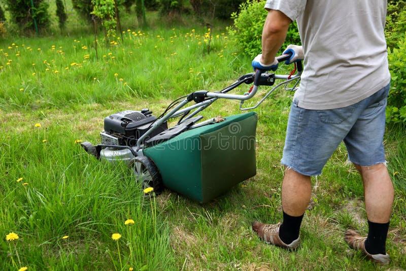 L'homme coupe la pelouse avec une faucheuse de combustion dans le jardin d'arrière-cour photos libres de droits