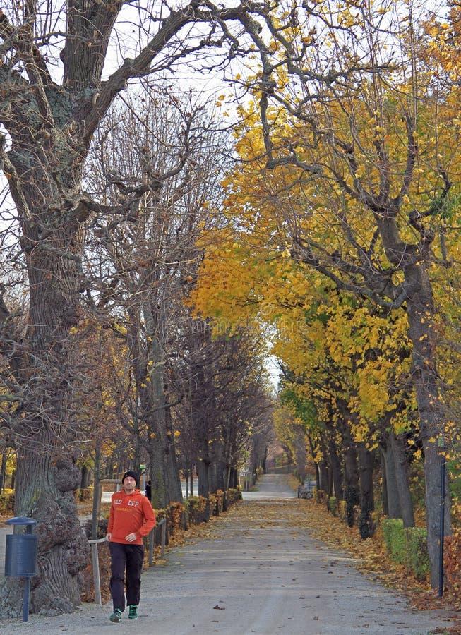 L'homme court en parc de Vienne, Autriche photographie stock libre de droits