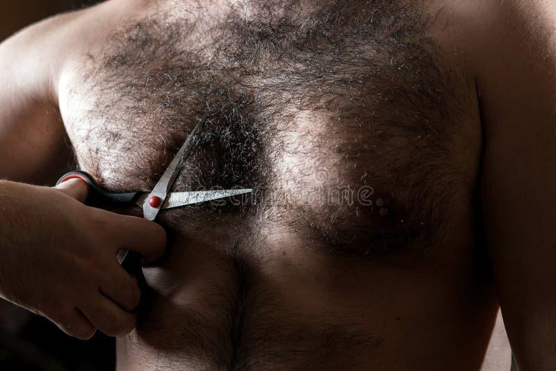 L'homme de plan rapproché avec des ciseaux coupe les cheveux sur son coffre velu photographie stock