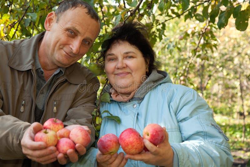 L'homme et le femme étirent à l'extérieur leurs mains avec des pommes photographie stock libre de droits