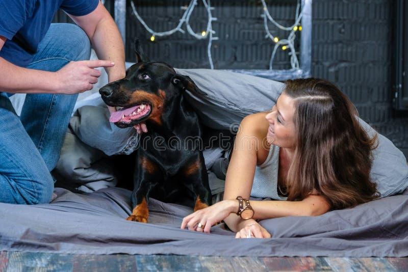 L'homme gronde le chien vilain qui s'est élevé dans le lit image stock
