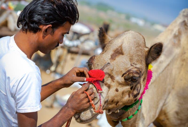 L'homme indien de Rajasthani décore son chameau à la foire de Pushkar, Inde image stock