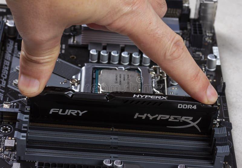L'homme installe une mémoire RAM Module de fureur de la RDA 4 DIMM 16 gigaoctet Kingston HyperX dans la fente sur le plan rapproc images libres de droits