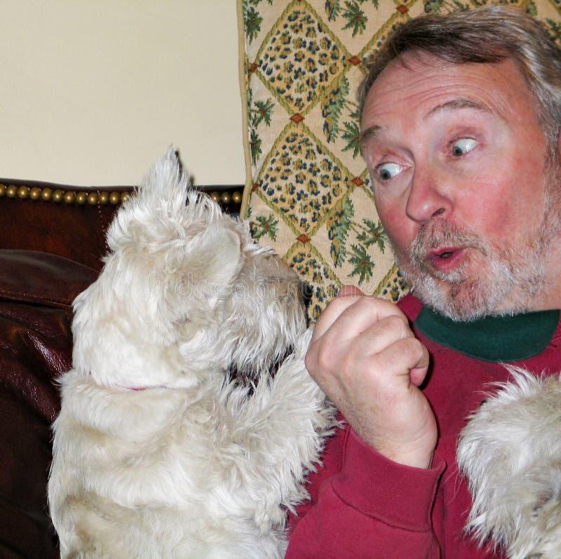 L'homme joue et parle avec le chien de Westie avec le regard drôle sur son visage images stock