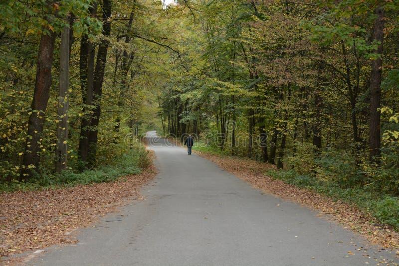 L'homme marche le long de la route dans la forêt photographie stock