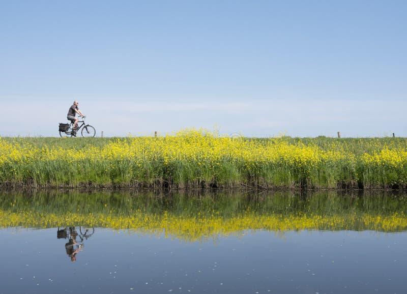 L'homme monte la bicyclette le long de l'eau de proche valleikanaal leusden en Hollandes et passe les fleurs de floraison jaunes  photographie stock