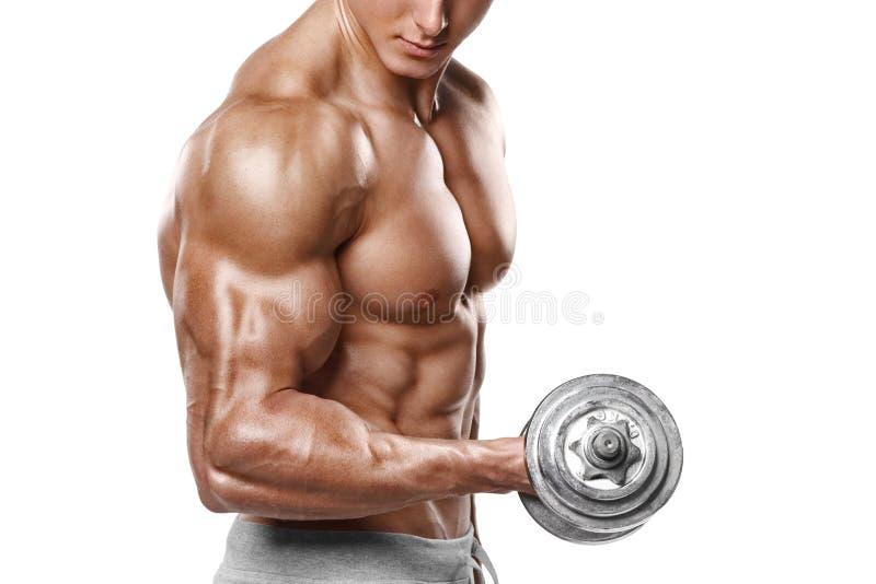 L'homme musculaire établissant faire s'exerce avec des haltères aux biceps, ABS nu masculin fort de torse, d'isolement image stock