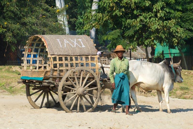 Download L'homme Plus âgé Avec Le Chariot Dessiné Par Un Zébu Attend Des Passagers Myanmar Photo stock éditorial - Image du boeuf, passager: 87707528