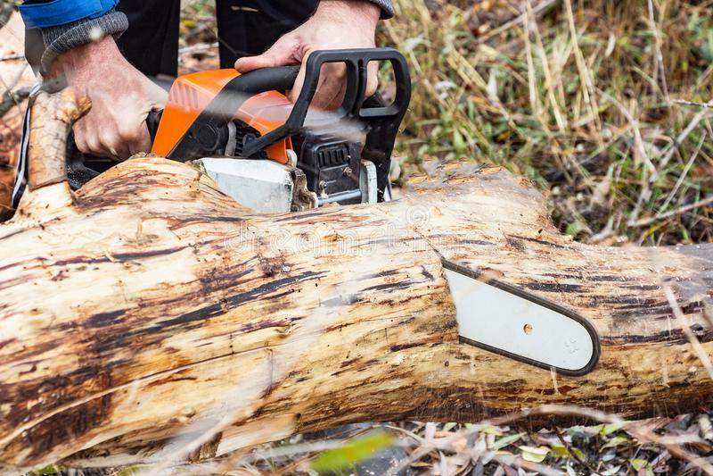 L'homme scie le tronc d'arbre de scie d'essence photographie stock