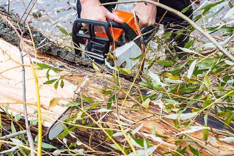 L'homme scie le tronc d'arbre de scie d'essence photo stock