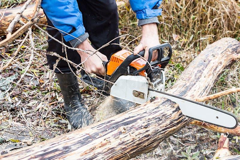 L'homme scie le tronc d'arbre de scie d'essence photo libre de droits