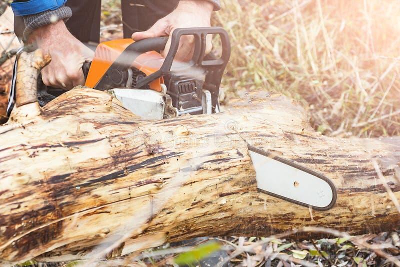L'homme scie le tronc d'arbre de scie d'essence image stock