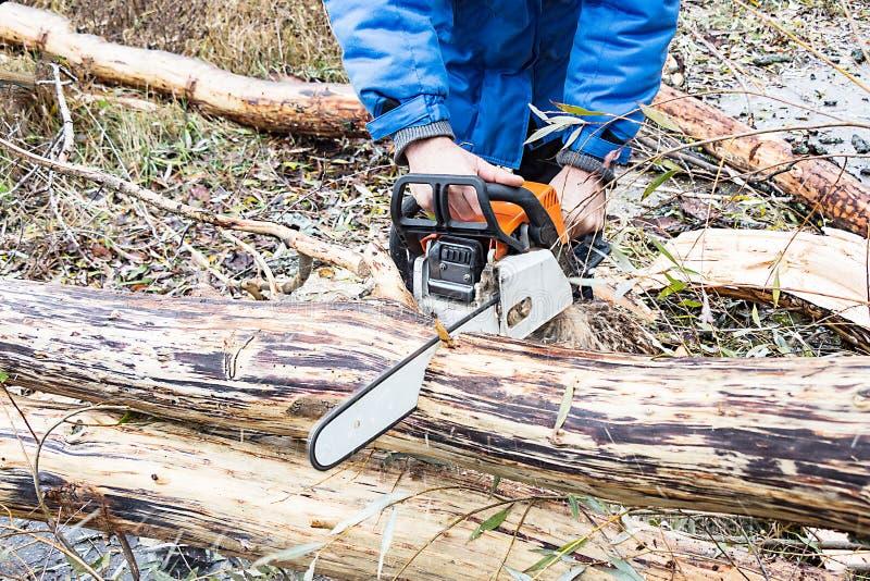 L'homme scie le tronc d'arbre de scie d'essence images libres de droits