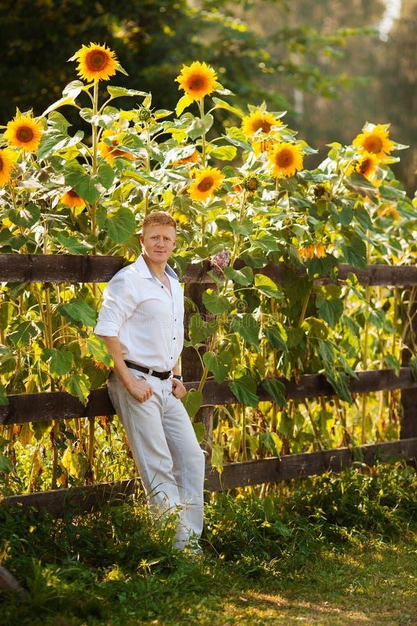 L'homme se tient prêt la barrière près des tournesols image stock