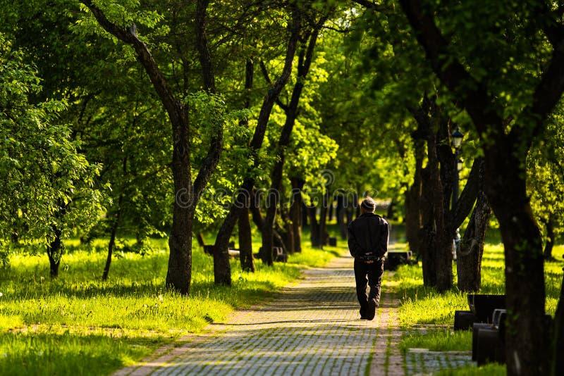 L'homme seul va loin sur la route parmi des arbres photographie stock