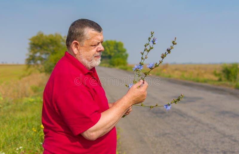 L'homme supérieur utilisant le polo rouge formant le groupe de chicorée sauvage fleurit pour son épouse image libre de droits