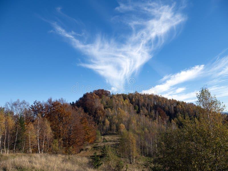 L'horizontal d'automne de montagne avec la forêt colorée photos stock