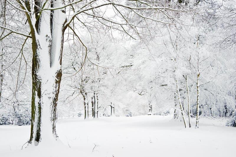 L'horizontal de l'hiver par la neige a couvert la forêt photos stock