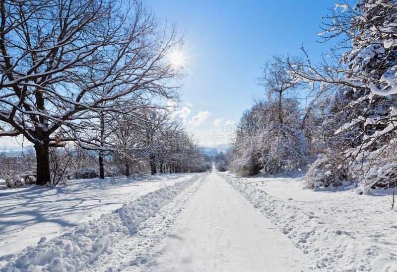L'horizontal de route de l'hiver avec la neige a couvert les arbres et le soleil lumineux images stock