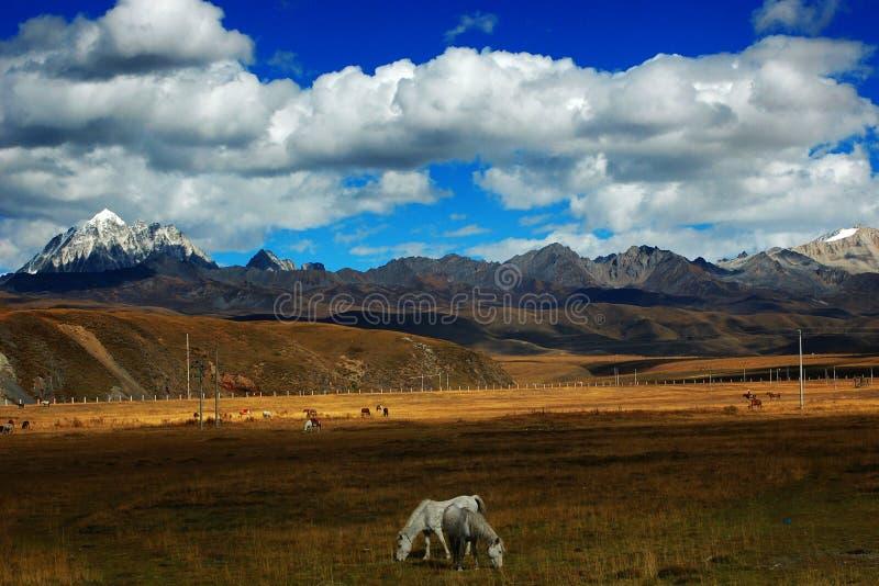 L'horizontal du plateau occidental de Sichuan image libre de droits