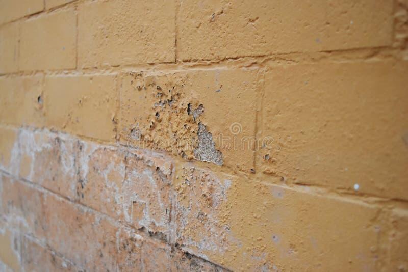 L'humidit? excessive peut causer le mur de peinture de moule et d'?pluchage tel que des fuites d'eau de pluie ou des fuites de l' images libres de droits