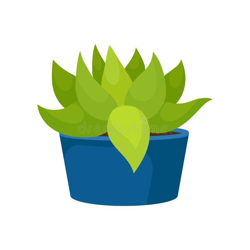 L'icône plate de vecteur du cactus avec le vert part dans le pot en céramique bleu Usine succulente Élément à la maison naturel d illustration de vecteur