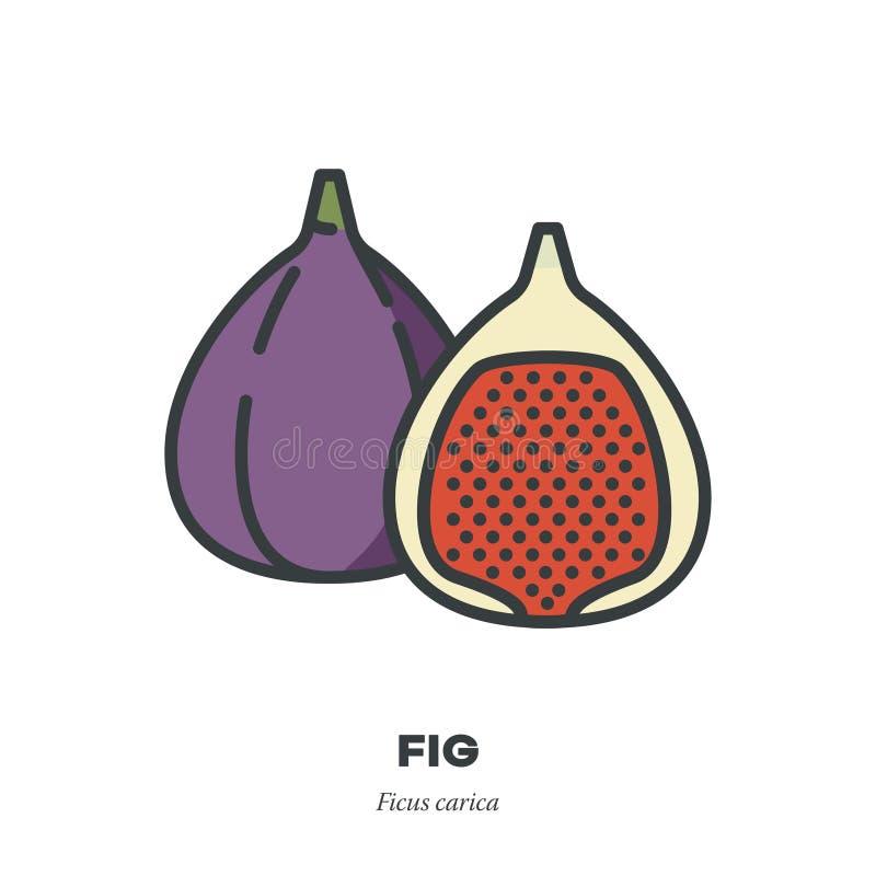 L'icona della frutta del fico, ha riempito il vettore di stile del profilo illustrazione vettoriale