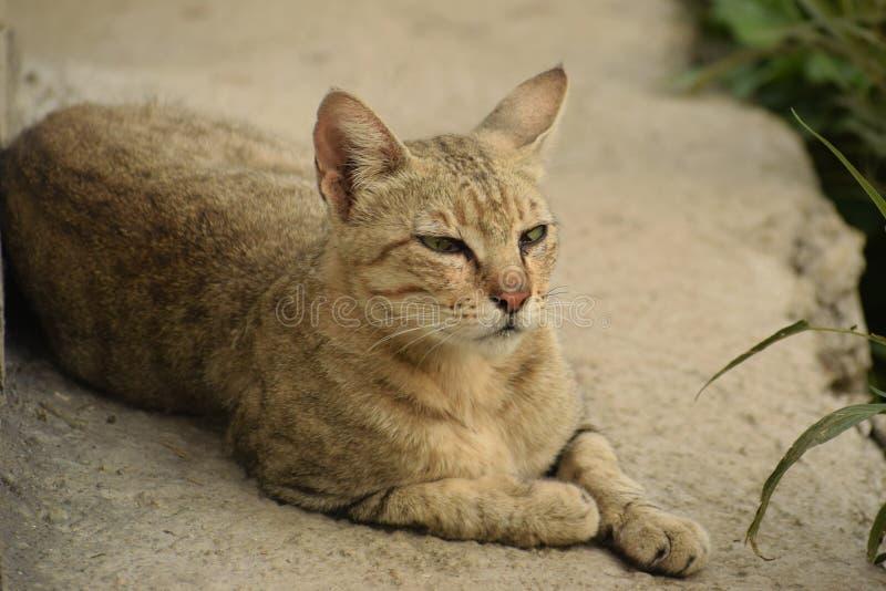 L'idéal du calme existe chez un chat se reposant photographie stock libre de droits