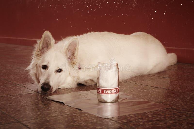 L'identificazione accertata dell'odore rintraccia dal cane poliziotto su posizione fotografie stock libere da diritti