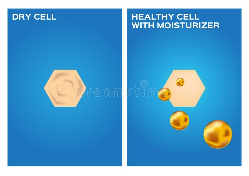 L'idratante fa la pelle asciutta a pelle sana, 2 punti illustrazione di stock
